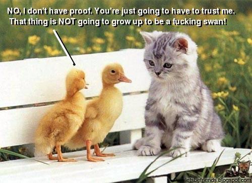 Funny animals Duckies-n-kitty